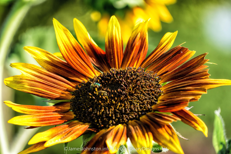 Flowers in the Garden - James Johnston