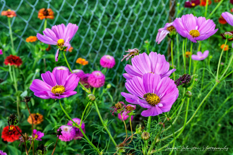 Flowers From The Garden Flower Photography James Johnston